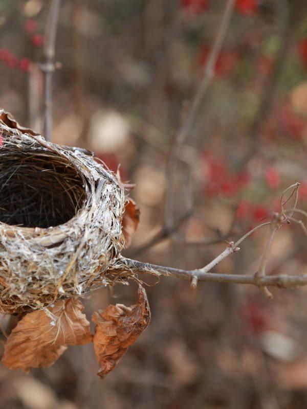 the-birds-nest-3826363_1920